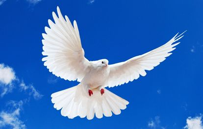21 Ways the Holy Spirit Manifests Himself to Believers